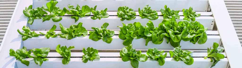tipologie di vertical farm
