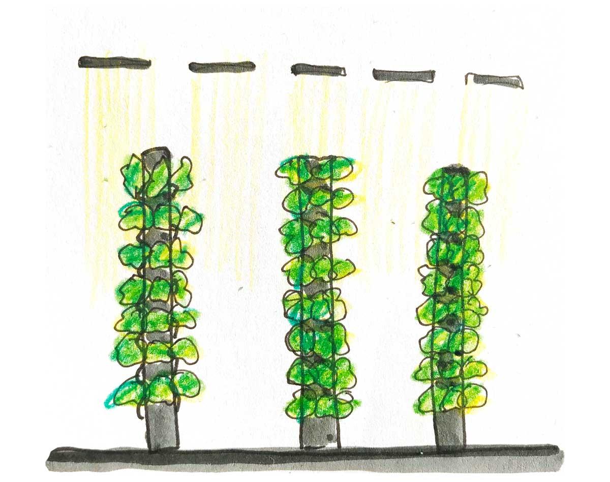 foto vertical farming, colonne